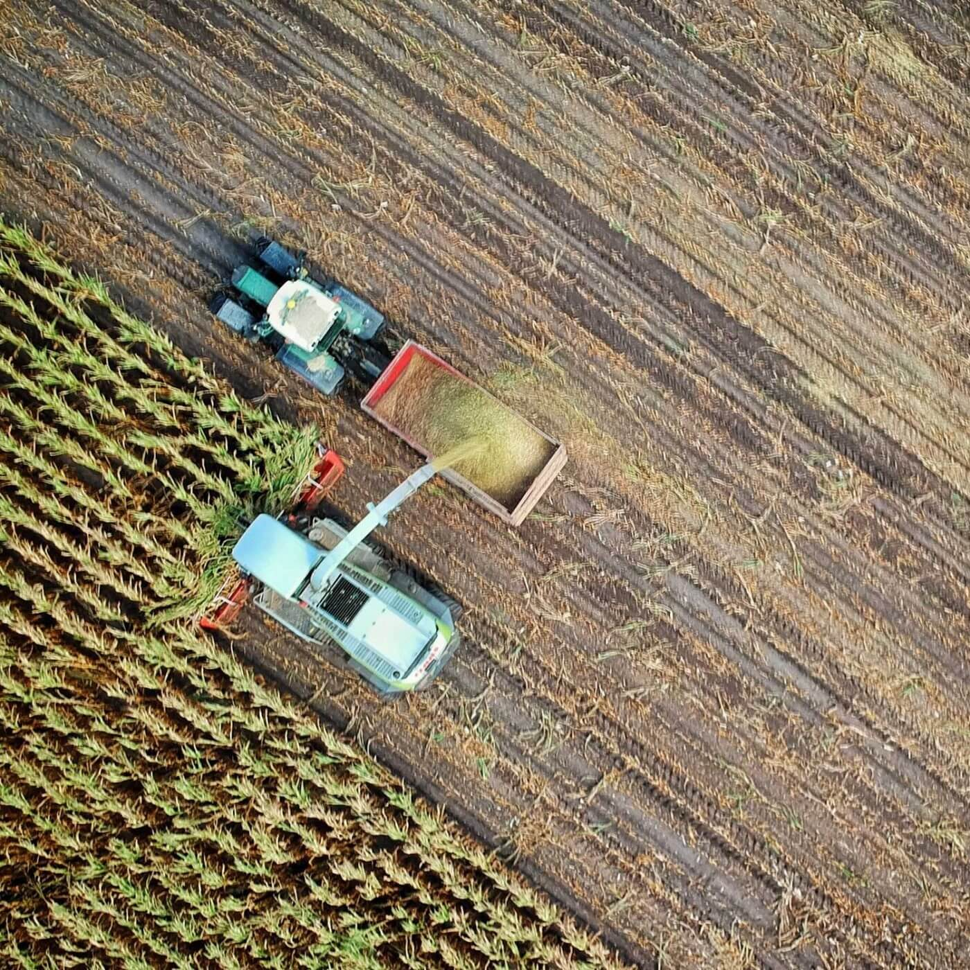 Two trucks in an agricultural field harvesting crops.